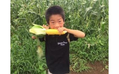 NN08-C <限定>とうもろこし「生育時期に農薬を極力使わずに育てた」