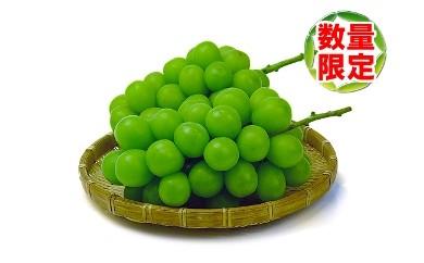<香川産>シャインマスカット[秀品]1kgの詰め合わせ