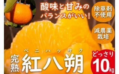 酸味と甘みのバランスがいい!完熟紅八朔(ベニハッサク) 10kg
