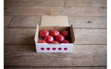 たかしまフルーティトマト 糖度9度以上 情熱ハート 1kg箱×1