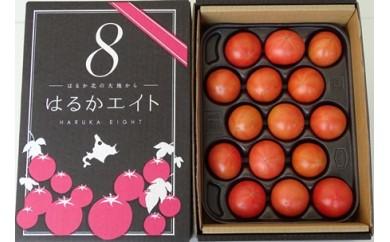 北はるか産 フルーツトマト「はるかエイト」 2kg
