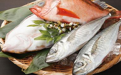 四季の旬の地魚の詰め合わせ【A】