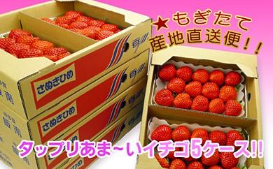 香川県オリジナル品種!さぬき姫いちご 10パック