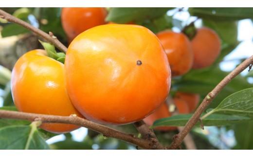 (434) 献上柿の郷の富有柿(2Lサイズ 28個入)