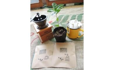 アラビカ種(ブルボン種由来)のコーヒー苗木とドリップバッグ
