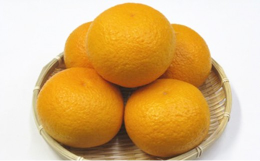 [№4631-1321]歯ごたえのある果肉 「甘夏柑」 10kg