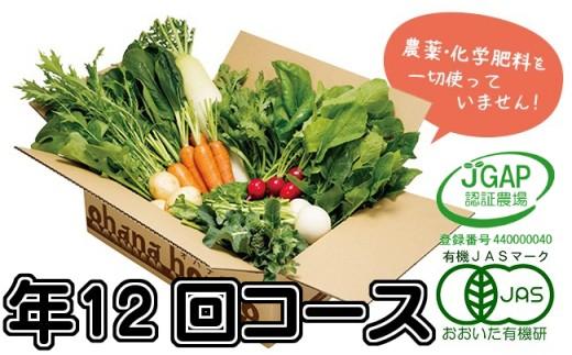 【定】有機野菜11品目をお届け!ohanaの定期便≪年12回コース≫