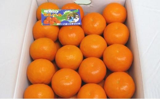 [№4631-1323]セミノールオレンジ 5kg