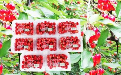 [№5823-0411]さがえ西村山産さくらんぼ 秀品「佐藤錦」1.2kg(200g×6)Lサイズ