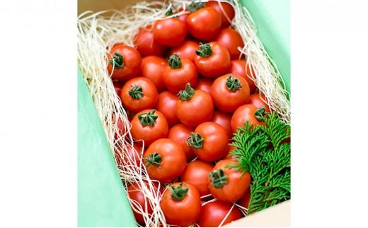 [№5541-0022]フルーツトマト「星のしずく」 900g