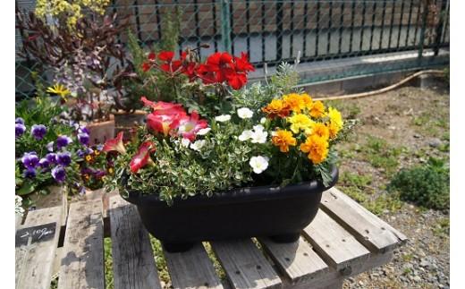 E-049 季節の花の寄せ植え 20㎝鉢