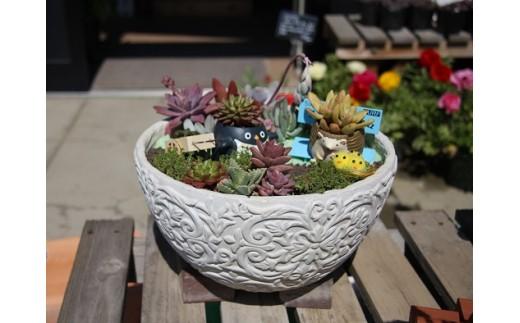 D-086 多肉植物の寄せ植え 30㎝鉢