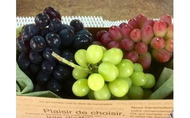 [№5657-1160]皮ごと食べられるブドウ詰合せ約2kg 3房