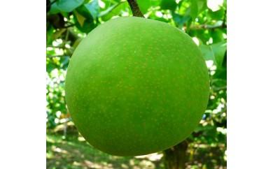 【受付終了】【014】二十世紀梨(ご家庭用(5キロ)やぶやフルーツガーデン)