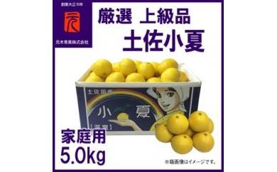 厳選上級品家庭用土佐小夏約5.0kgM~Lサイズ/元木青果