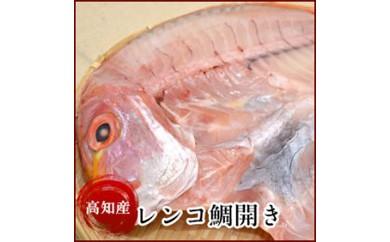 高知県産 レンコ鯛開き(1尾)たい(タイ)の干物 岡岩商店