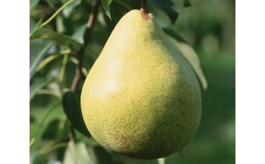No.127 【数量限定】小松谷りんご園 果物の女王 完熟ラ・フランス