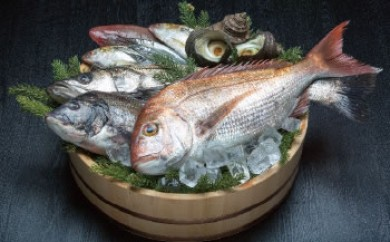 「旬のお魚 おたのしみ箱」ご希望日にお届けします!