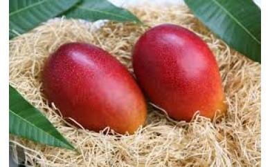 【数量限定】鹿児島県産完熟マンゴー<明宝>800g