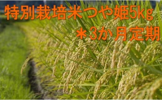 004-005-01【先行予約/H30新米10月~定期】特別栽培米つや姫(精米)