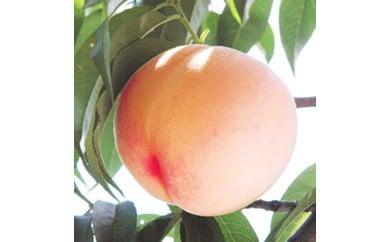 ★初夏のフルーツ  桃!大きい2Lサイズ!2kg