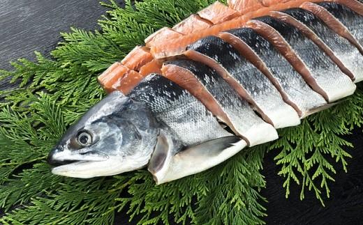 [01-204]北海道日高産 銀毛鮭姿切身(生冷凍)