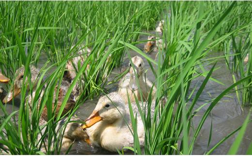 0211 新潟県胎内産JAS有機認証合鴨栽培コシヒカリ玄米5kg