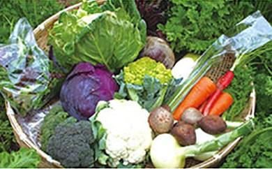よしのがり野菜セットラージ【頒布会】2週間毎に、季節の野菜をお送りします(全24回)