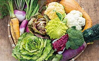イタリア野菜セットレギュラー【頒布会】2週間毎に、季節の野菜をお送りします(全24回)
