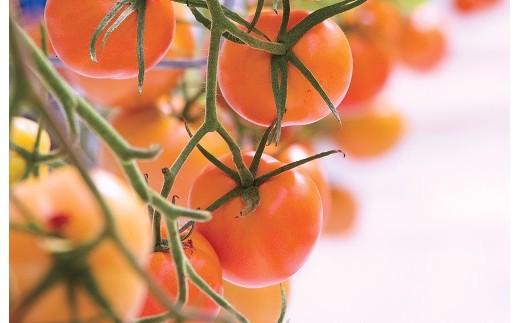 Fd-08 トマトでリコピン!ジュレまで美味しい四万十とまと 1箱セット