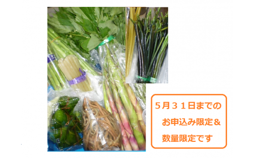 C-21 【春】旬の山菜セット