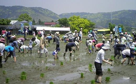 R-1 農業体験「米作り」田植え(5/19)・稲刈り(9/15) 【クレジット限定】