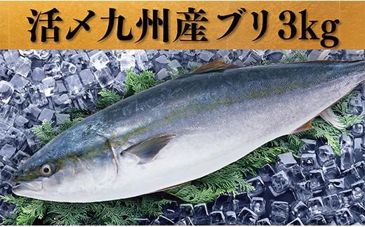 D01-23 筑豊魚市場厳選!脂ノリ抜群「活じめ九州産ブリ」ボリューム満点3kg