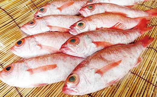 10.幻の高級魚「のどぐろ(鮮魚)」