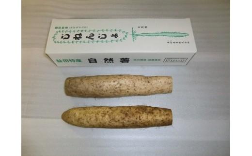 A-142 真砂地区の自然薯(カット)【1pt】