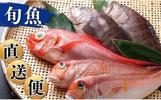 D01-13 筑豊魚市場厳選!旬の天然魚を直送「特選旬魚直送便」