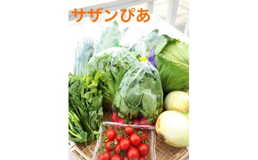 E-037 直売所の泉州産旬野菜セット