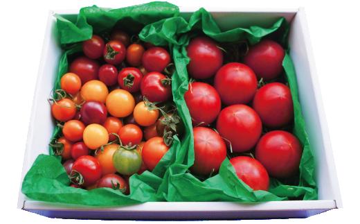A-47.カラフルトマトとフルーツトマトのハーフ&ハーフ