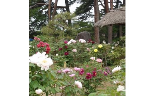 須賀川牡丹園入園券 3枚セット【1034642】