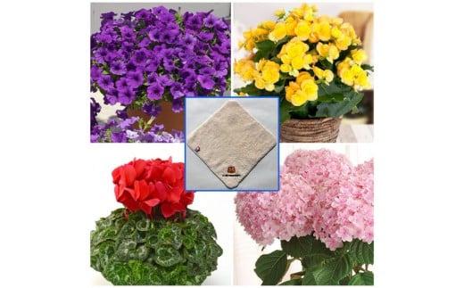 K-33 【敬老の日】季節の鉢花&今治ミニタオルセット【メッセージ刺繍入り】ふくろう:いつまでもおげんきで