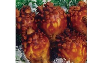 【受付終了】ミネラル豊富な海の果実 唐桑産殻付き ほやセット