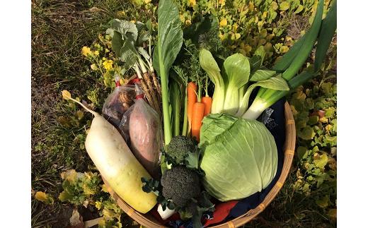 《B1-006》【自家栽培】有機循環農法で育てた野菜詰め合わせ(約10点セット) 【平成30年7月中旬発送開始お礼品】