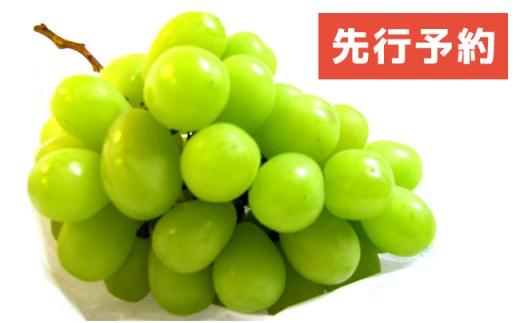 AF005 【ボリューム満点】九州産シャインマスカット 約2kg(4房程度)