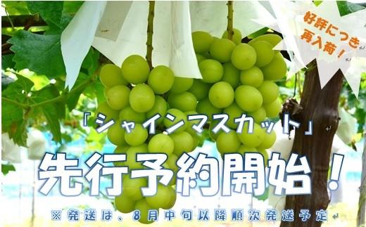 敷島醸造のシャインマスカット 2kg