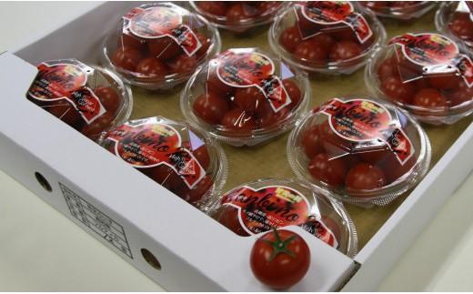 B-73 高糖度&高機能性 フルーツトマト150g×12パック