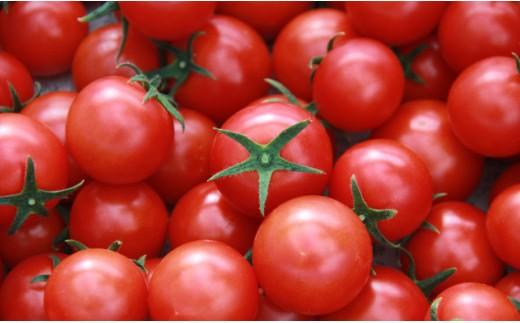 真っ赤に輝くフルーツトマト