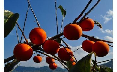 トロっとまろやか 富有柿(7.5kg)
