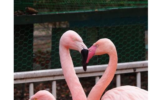 羽村市動物公園一日入園ペアチケット(SANAさんデザインの限定チケット)