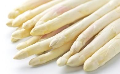 [№5832-0215]朝採り新鮮【ホワイトアスパラガス】約1kg