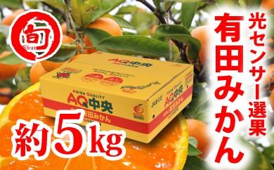 【秀選品】有田みかん 光センサー選果  5kg(S~L)旬の味覚市場